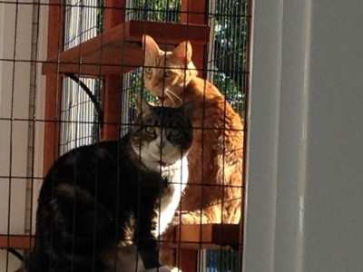 Home-Remodel-Catio-Cats