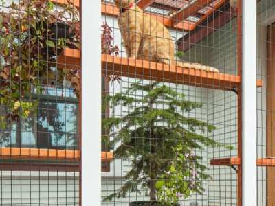 Home-Remodel-Catio-East