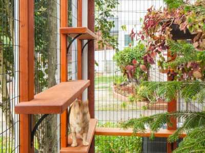 Home-Remodel-Catio-North