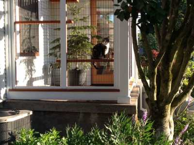 Home-Remodel-Catio-South